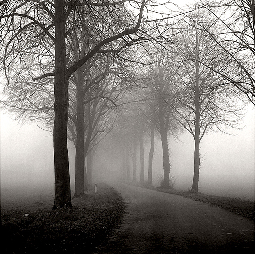 Foggy Day I
